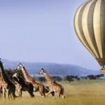 Serengeti-Ballooning